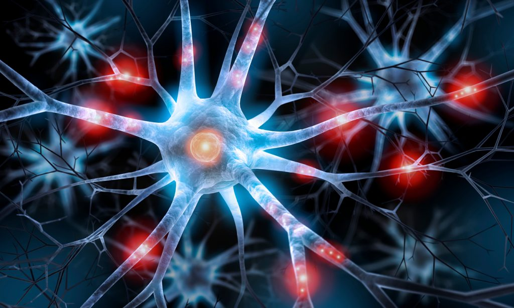 neuron, neurons, brain, cells, nervous, system, function, parts of, types of, diagram, functions, structure, where are, located, labeled, sensory, motor, dendrites, classification, how many, in the brain, characteristics, 3 types of, what is, nerves, the same thing, where are, found, what does it do, neuroscience, for business, neuromanagement, neural pathways, axions, dendrites, soma, synapses