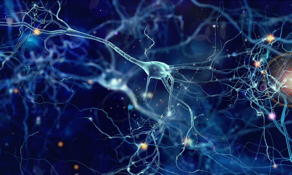 neural, network, game, brain, potential, simulator, play, capacity, aim and shoot, Victor Ribeiro, software, engineer, play, link, how to play, how, works
